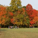 Stout Family Fields