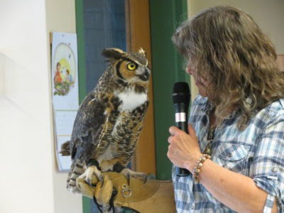 Oscar the Great Horned Owl
