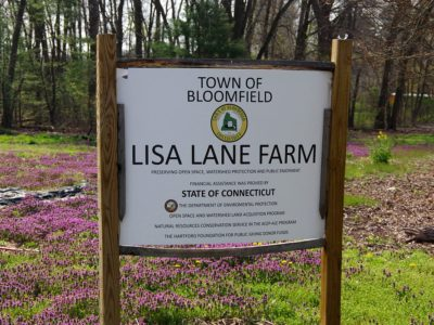 Lisa Lane Farm