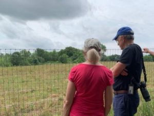 Overlooking field where Purple Martins hunt insects