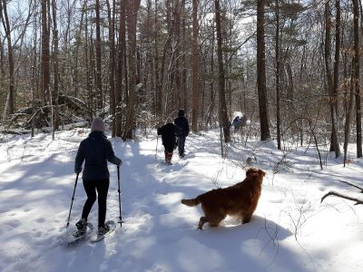 Photograph of a small group of hikers with snow shoes and dog walking in the woods of Speer Preserve on a sunny day.